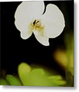 Floating Orchid Metal Print