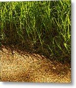 Floating Seeds-yosemite National Park Metal Print