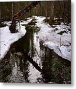 Flooding Forest Metal Print