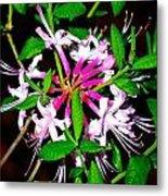 Flora In Pink Metal Print
