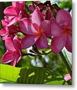 Flora Key West Metal Print