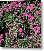 Floral Afternoon Metal Print