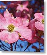 Floral Art Print Pink Dogwood Tree Flowers Metal Print