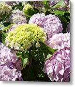 Floral Pink Lavender Hydrangea Garden Art Prints Metal Print