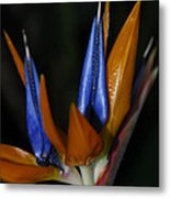 Floral Points Metal Print