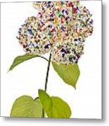 Floral Psychedelic Isolated Metal Print