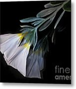 Floral Reflections 3 Metal Print