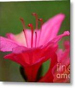 Floral Rosa Metal Print