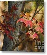 Florida Autumn Leaves Metal Print