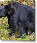 Florida Black Bear Metal Print