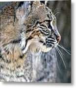 Florida Bobcat Metal Print