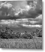 Florida Everglades 0184bw Metal Print by Rudy Umans