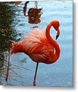 Florida Flamingo Metal Print