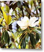 Florida Magnolia Metal Print