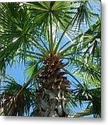 Florida Palm Tree Metal Print