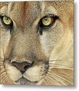 Florida Panther Metal Print