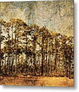Florida Pine 4 Metal Print