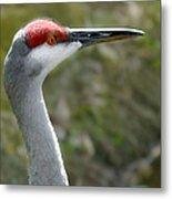 Florida Sandhill Crane Metal Print