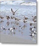 Florida Seabirds Metal Print