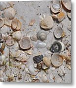 Florida Seashells Metal Print