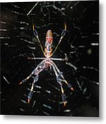 Insect Me Closely Metal Print