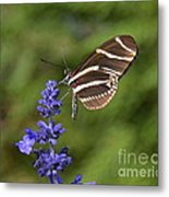 Florida State Butterfly Metal Print