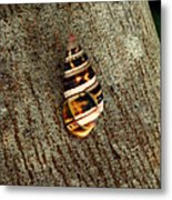 Florida Tree Snail. Everglades N.p. Metal Print