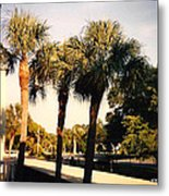 Florida Trees 2 Metal Print
