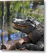 Florida - Where The Alligator Smiles Metal Print