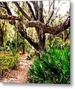 Florida Woods Metal Print