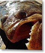 Flounder Face 2 10/26 Metal Print