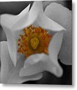 Flower 02 Metal Print