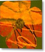 Flower 1 Metal Print by Dorothy Rafferty