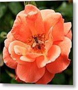 Flower 14 Metal Print
