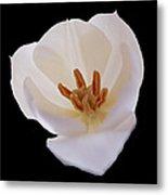 Flower 270 Metal Print