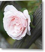 Flower Among The Fence Metal Print