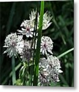 Flower And Leaf Metal Print by Esther Wilson