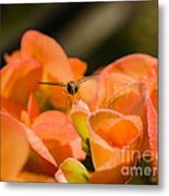 Flower And Ready To Fly Metal Print