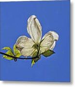 Flower And Sky Metal Print
