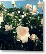 Flower Bush  Metal Print by Kiara Reynolds