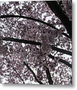 Flower Canopy And Sky Metal Print