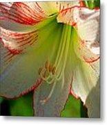 Flower Child Amaryllis Flower Art Metal Print