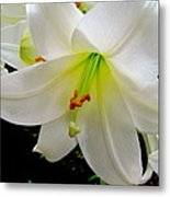 Flower Christmas Lily. Metal Print by Joyce Woodhouse