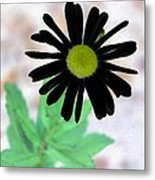 Flower - Daisy - Photopower 327 Metal Print