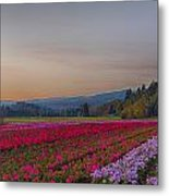 Flower Field At Sunset In A Standard Ratio Metal Print