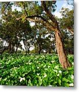 Flower Field - South Western Australia Metal Print