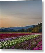 Flower Fields 2 Cropped Into A Standard Ratio Metal Print
