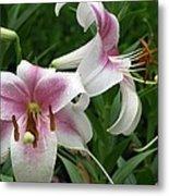 Flower Garden 20 Metal Print