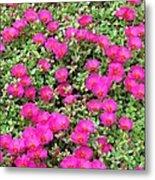 Flower Garden 38 Metal Print