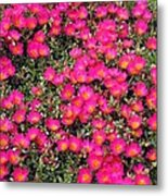 Flower Garden 39 Metal Print